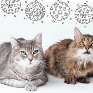 MHS 2019 holiday card cats