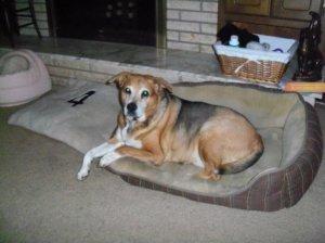 Dog laying on dog bed.