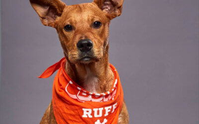Michigan Shelter Dog will Compete in 2020 Puppy Bowl
