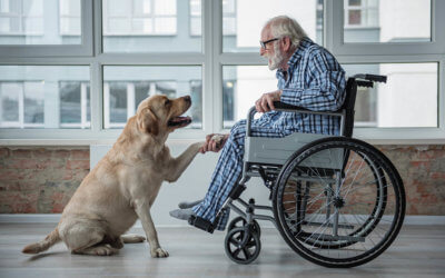 Make Sure Your Estate Planning Protects Your Pets
