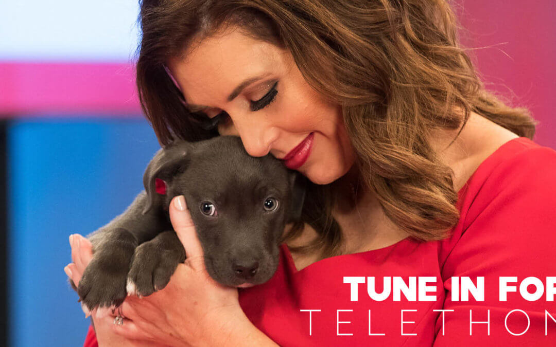 2020 Michigan Humane Society Telethon Presented by Purina