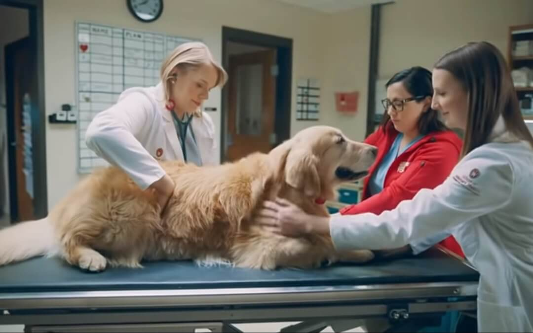 WeatherTech Super Bowl ad featuring a dog.