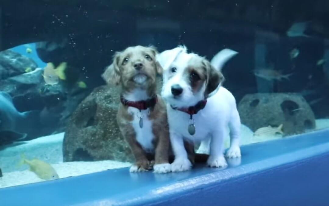 Watch Two Rescue Puppies Explore the Georgia Aquarium