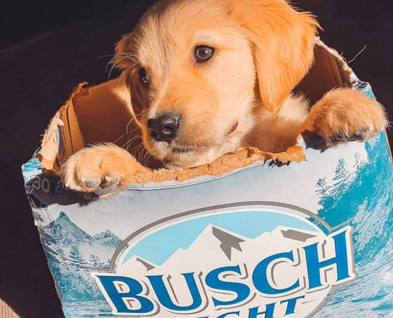 Busch is Giving Away Three-Month Supply of Beer to People Who Foster or Adopt a Dog