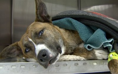 State Police Looking for Suspect Who Shot Dog in West Michigan