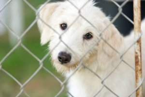 Dog behind a fence.