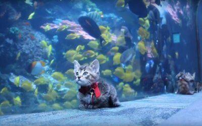 Watch Rescue Kittens Visit the Georgia Aquarium