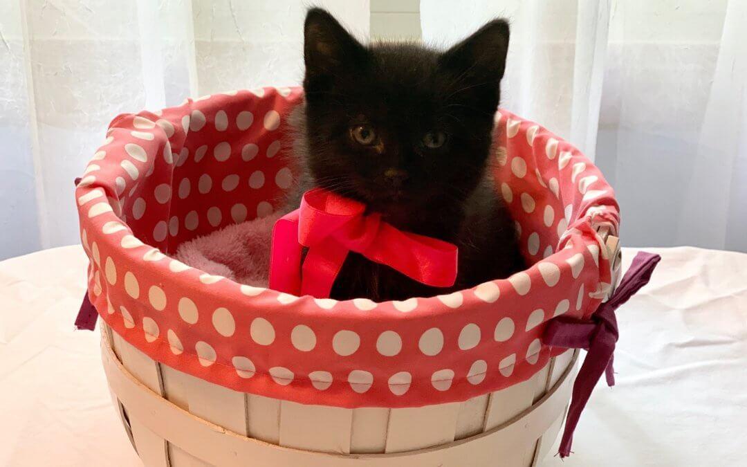 Kitten Shower Kitten