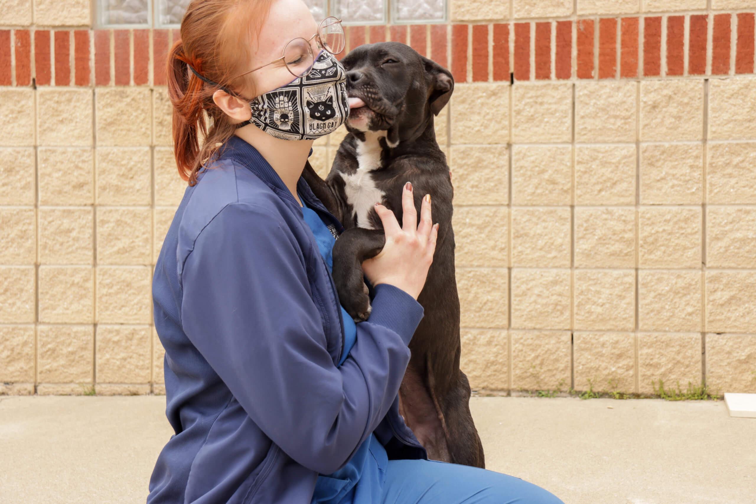 Dog licks woman.