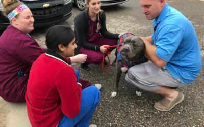 Animal Advocacy Update From Michigan Humane