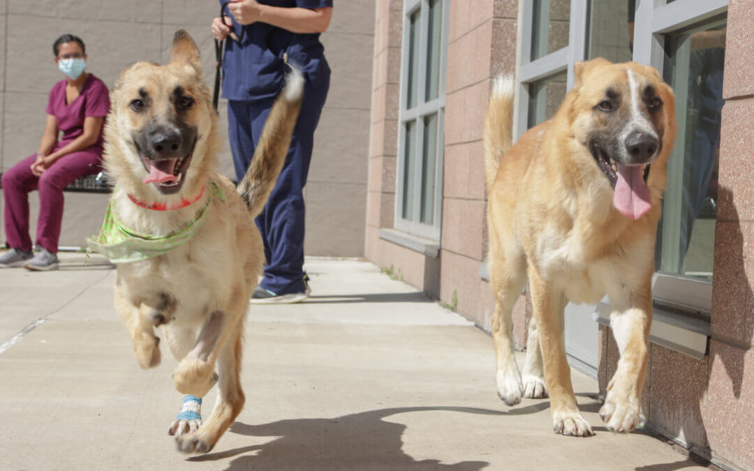 Two dogs running at Michigan Humane.