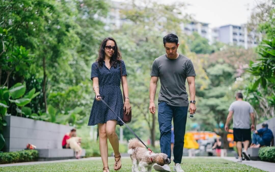 Couple walking their dog.