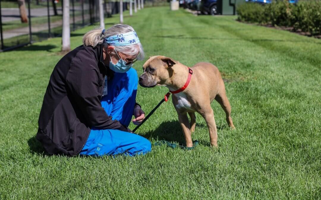 Flicka the dog at Michigan Humane