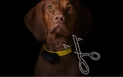 Petco Stops Selling Dog Shock Collars, Wants Pet Industry to Follow