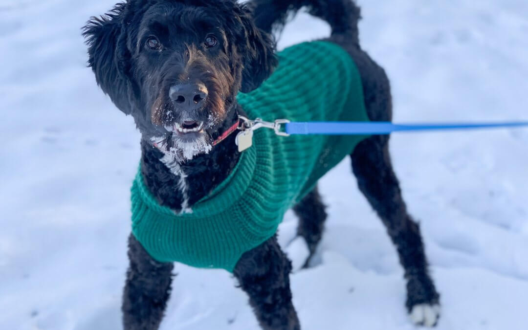 Cold Weather Tips to Keep Your Pet Warm This Winter