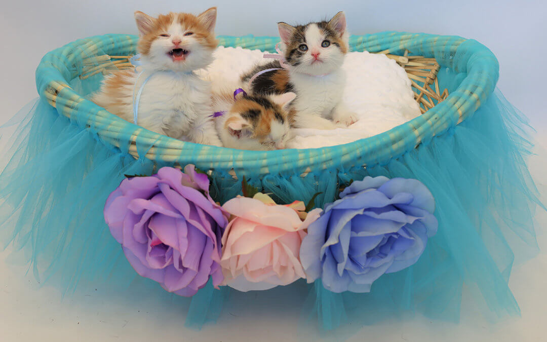 We Need Your Help Naming These Kittens